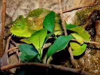 Chameleonworld