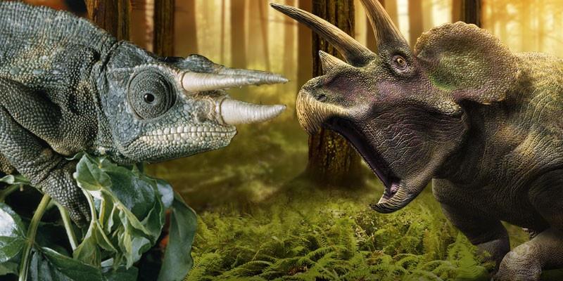 chameleon-triceratops_medium
