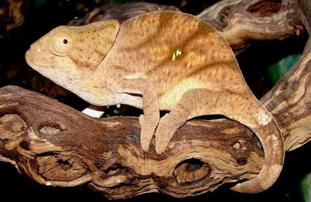 reptile-ru-20081006134133